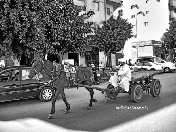 Horse Cart in the old town of Cairo