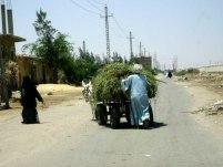 Rural Atmosphere in Suez