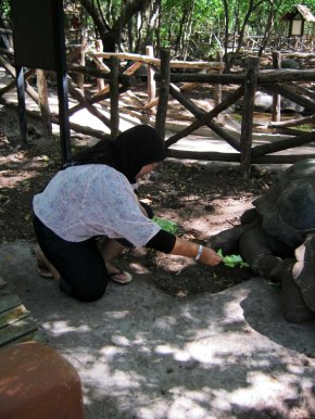 I'm feeding the tortoises
