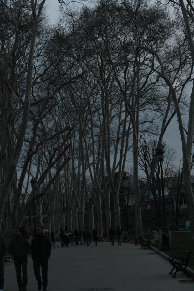Gulhane Park, during winter