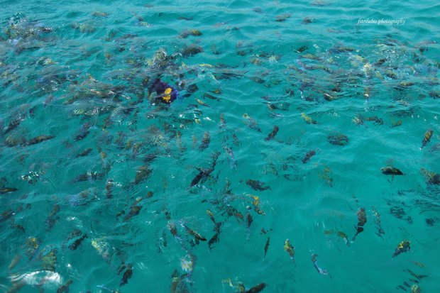 The fishes, in Arabian sea