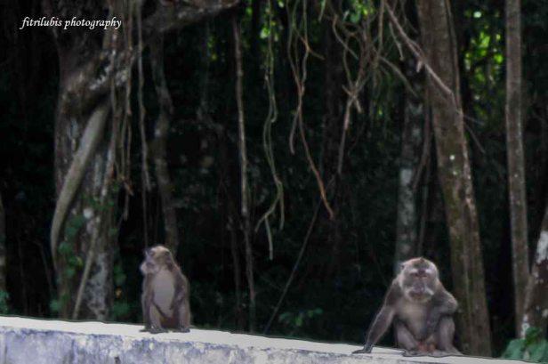 Monkeys at Kilometer Zero