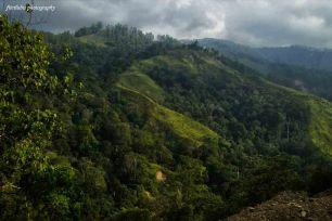 The Leuser, rain forest of Sumatera seen from Ladia Galaska